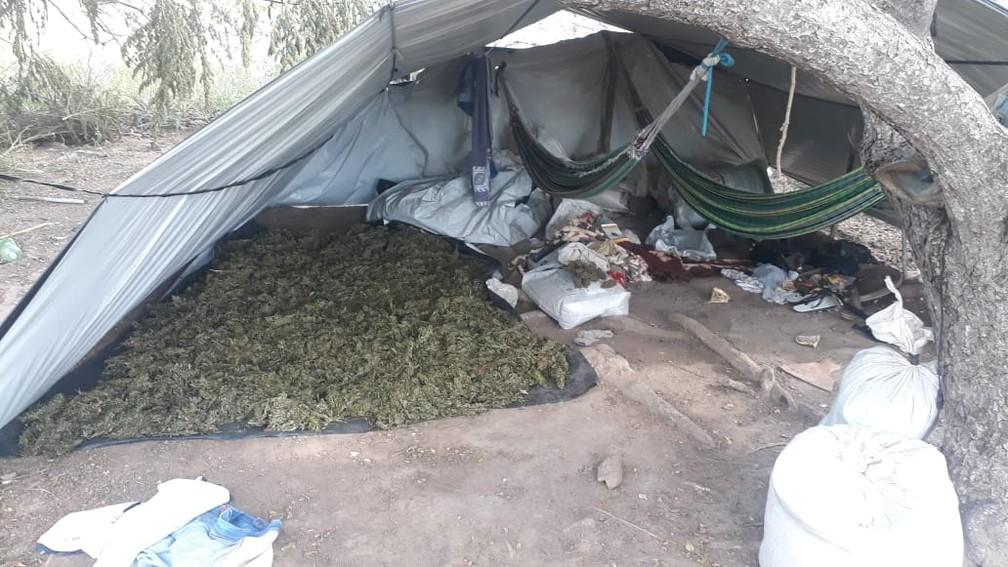 Drogas foram encontradas em um povoado da primeira apreensão — Foto: Divulgação/SSP-BA