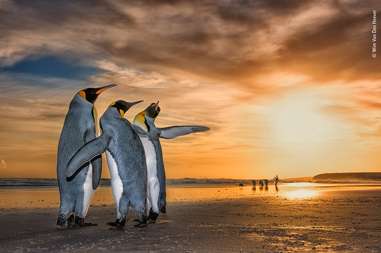 """O fotógrafo Wim van den Heever foi reconhecido pela imagem """"Three Kings"""" (três reis, em tradução livre) (Foto: Wim van den Heever)"""