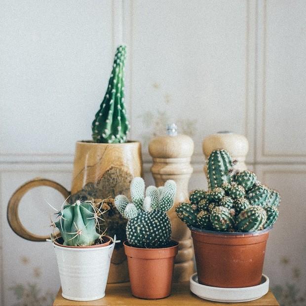 Mini cactos: como cuidar das suas plantinhas (Foto: Thinkstock)