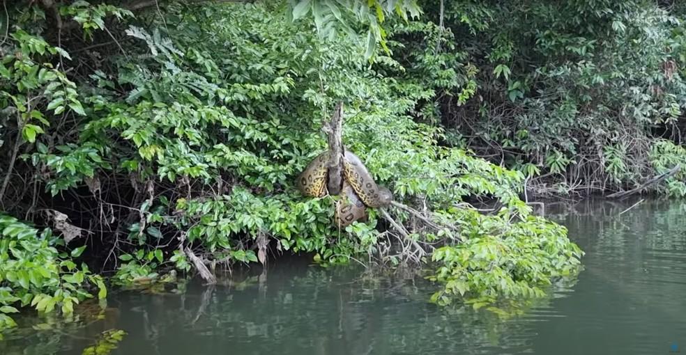 Sucuri é flagrada por pescadores em Porto Velho — Foto: Reprodução/YouTube