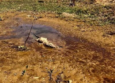 Foto mostra jacaré morto na região da Estrada Transpantaneira, no Mato Grosso (Foto: Ailton Lara/Acervo pessoal)