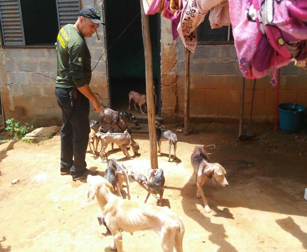 Cães desnutridos são resgatados em casa na Serra (Foto: Guarda Municipal Ambiental da Serra)