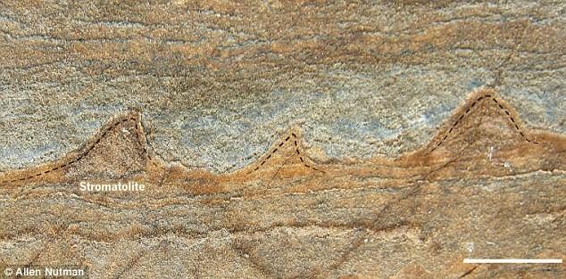 Amostras consideradas fósseis podem ser apenas rochas (Foto: Allen Nutman)