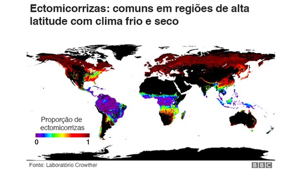 Ectomicorrizas (Foto: BBC)