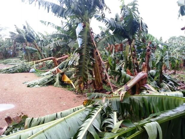 Produtores acreditam que haverá prejuízos na safra (Foto: Sindicato Rural do Vale do Ribeira/Divulgação)