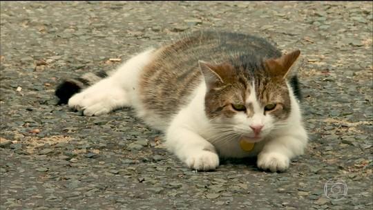 Gato Larry é personagem ilustre da política britânica