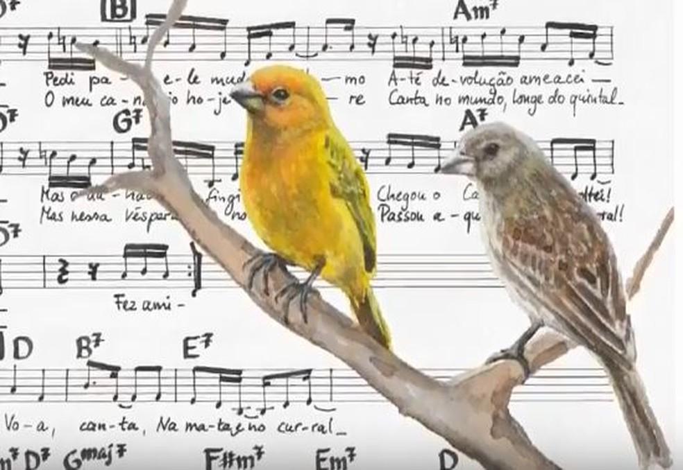 Um dos objetivos é valorizar a partitura musical como obra de expressividade gráfica (Foto: Passarinhada Musical)