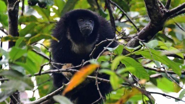 Milhares de espécies diferentes vivem na Amazônia (Foto: Getty Images via BBC News)
