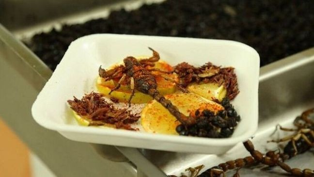 Iinsetos e aracnídeos comestíveis (Foto: BBC)