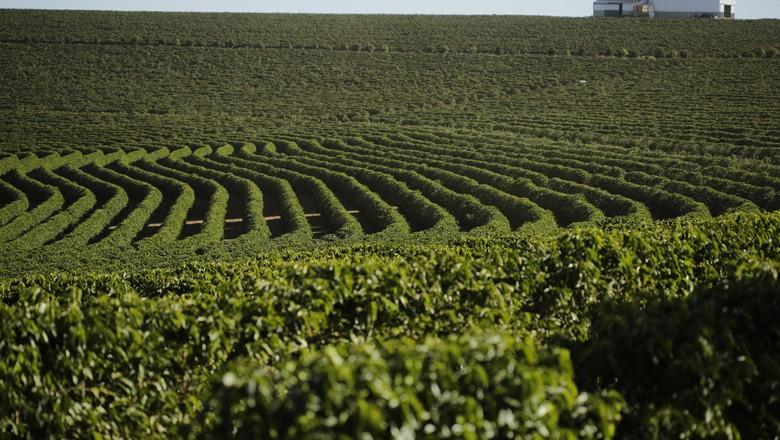 lavoura café cerrado mineiro plantação  (Foto: Federação dos Cafeicultores do Cerrado)