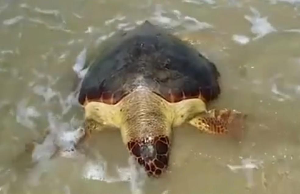 Nº de tartarugas mortas aumenta no sul da BA e chega a 150 desde janeiro deste ano; situação preocupa especialistas — Foto: Reprodução / TV Bahia