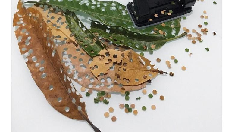Confete sustentável é feito com folhas caídas (Foto: Referêncial Verde/Reprodução Instagram)
