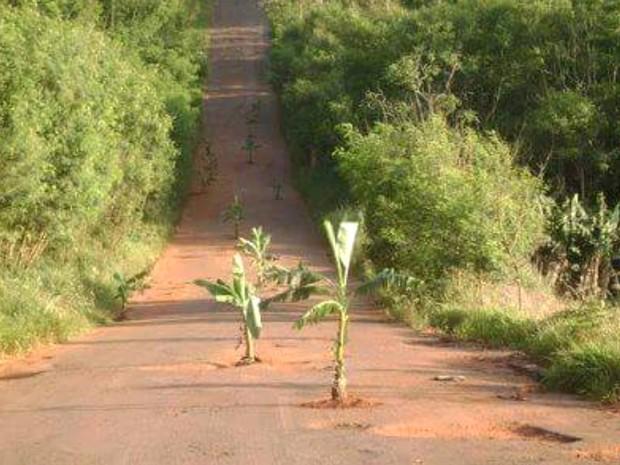 Motoristas colocam bananeiras para sinalizar buracos na GO-206, em Itarumã, Goiás (Foto: Arquivo pessoal/ Elias Ribeiro)