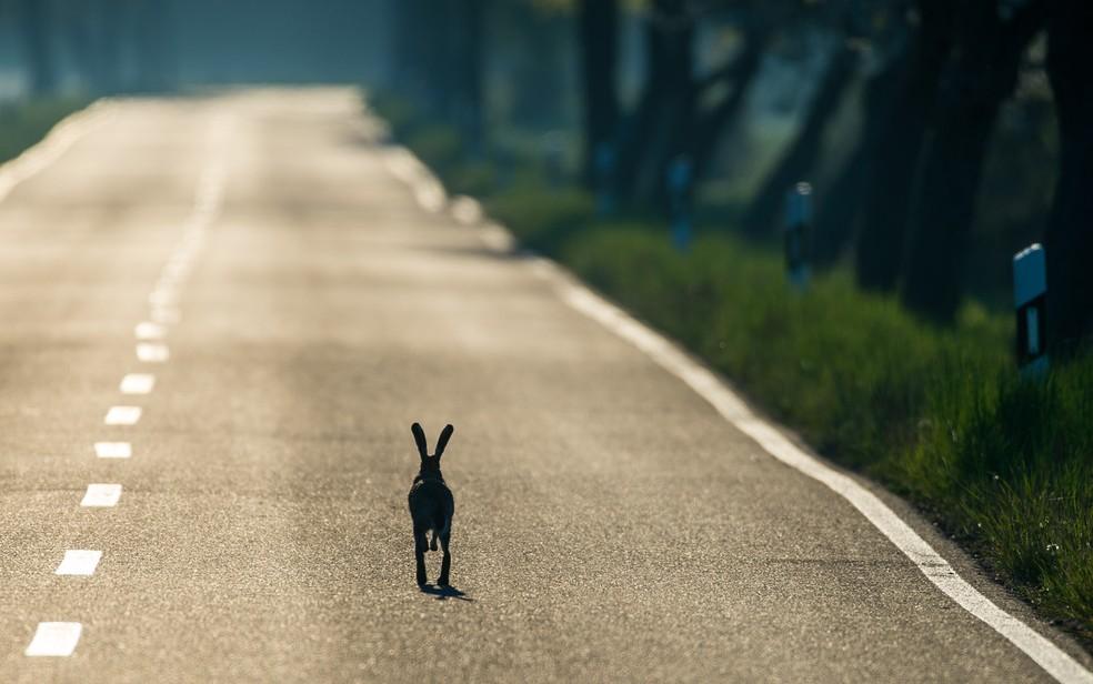 Lebre na estrada — Foto: Patrick Pleul/Dpa/Reuters