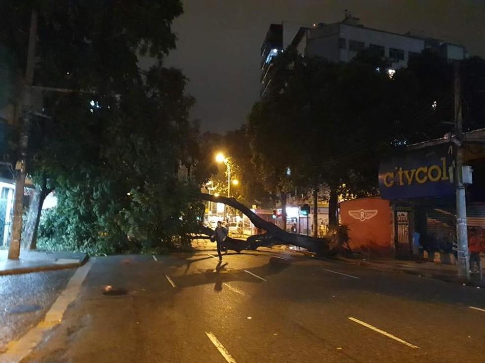 Uma árvore caiu na região da Tijuca na noite deste domingo — Foto: Gabriela David/GloboNews