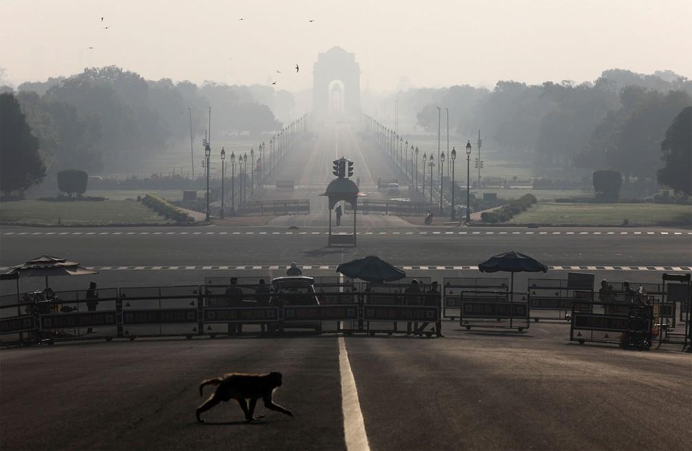 NOVA DÉLHI (Índia) - Macaco é visto atravessando a rua perto do Palácio Presidencial durante toque de recolher imposto em Nova Délhi — Foto: Anushree Fadnavis/Reuters