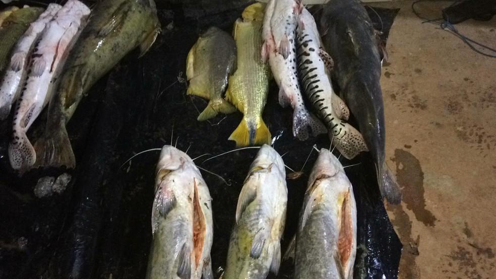 Caixas térmicas com quase 200 kg de pescado irregular são abandonadas às margens de rio em Rondonópolis — Foto: Polícia Militar de Mato Grosso