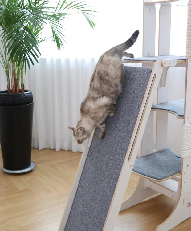 O escorredor é revestido de carpete para que o gato não escorregue (Foto: Mia Cara/ Reprodução)
