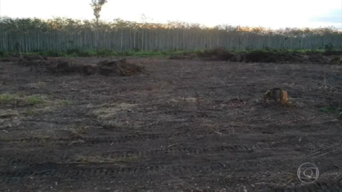 Equipe do JN flagra máquinas derrubando a floresta no Pará