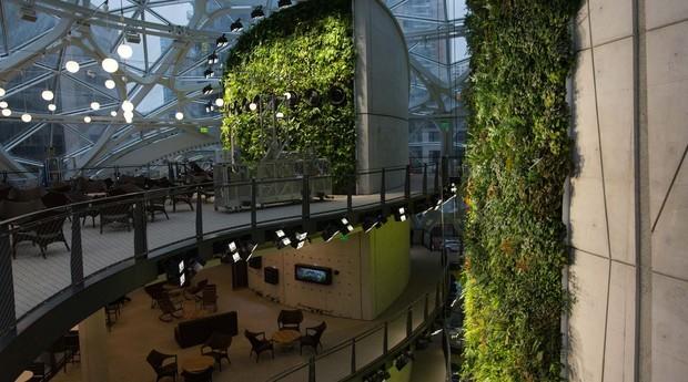 floresta, escritório, amazon (Foto: Reprodução/Bloomberg)