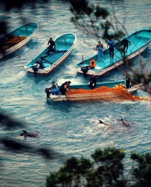 6 lições reveladoras do documentário 'Seaspiracy' da Netflix