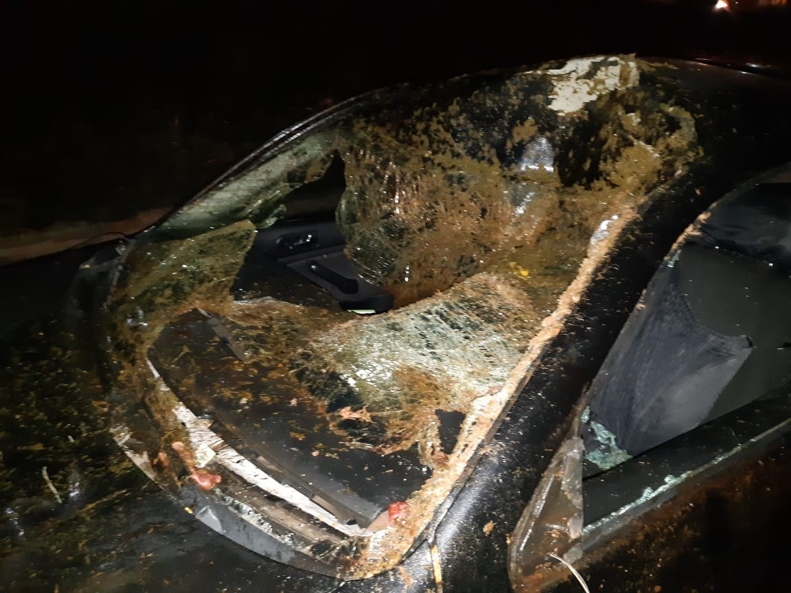 Acidente com cavalos soltos em rodovia de Marília deixa quatro pessoas feridas - Radio Evangelho Gospel