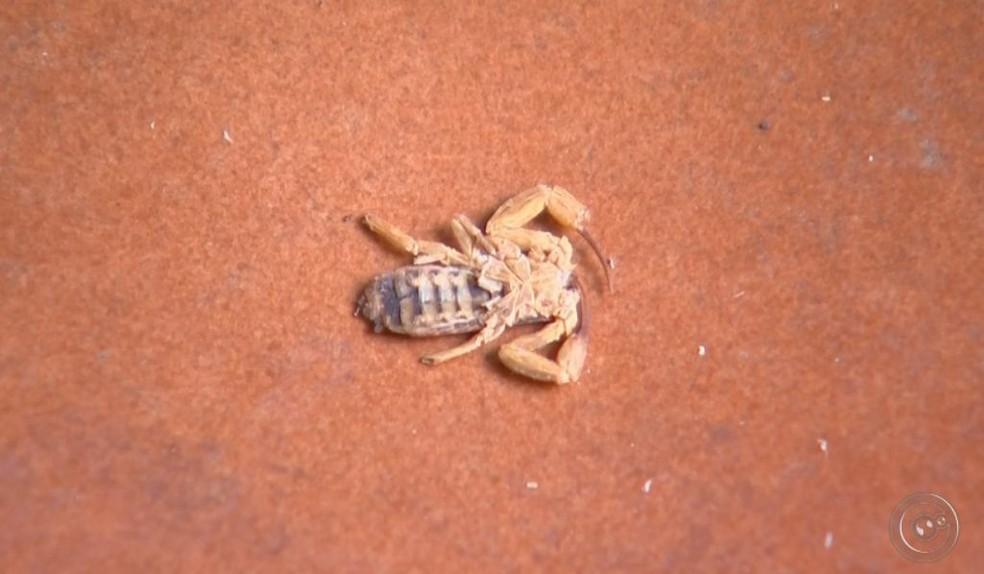 Moradores estão preocupados com o aparecimento de escorpiões no bairro onde o menino morava  (Foto: TV TEM / Reprodução )