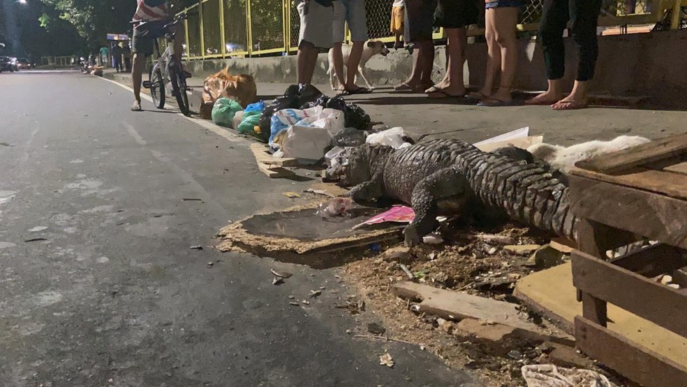 Moradores suspeitam que animal tenha sido morto a pauladas e deixado no local. — Foto: Patrick Marques/G1 AM