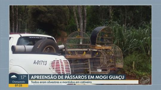 Polícia Ambiental apreende pássaros silvestres em cativeiro ilegal, em Mogi Guaçu