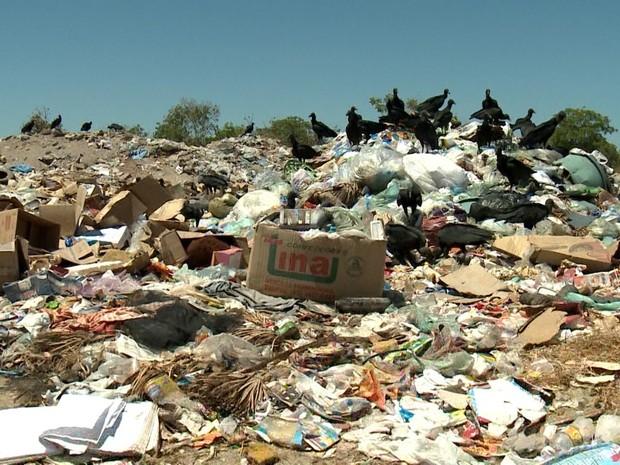 Moradores convivem com lixão a céu aberto em Barras (Foto: Reprodução/TV Clube)