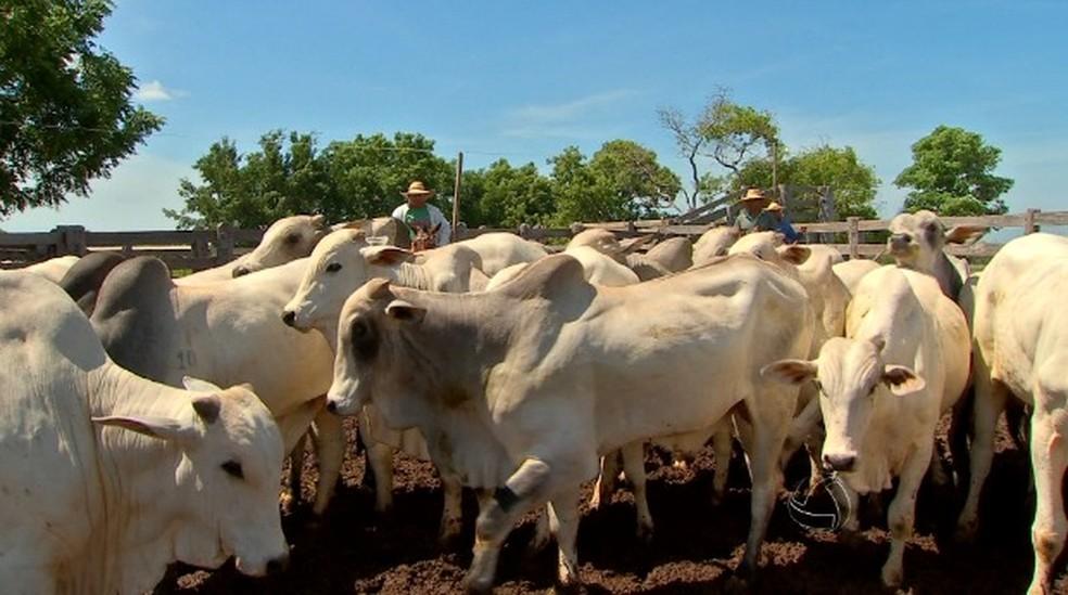 Produção de carne bovina tem aumentado — Foto: Reprodução/TVCA