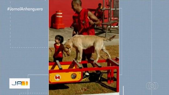 Cadela bombeira que atuou em Brumadinho morre no parto, em Goiânia