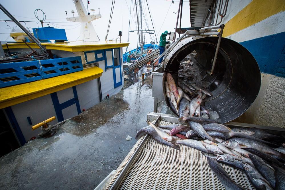 'Tainhômetro' monitora em tempo real e reúne dados sobre a pesca da tainha em SC