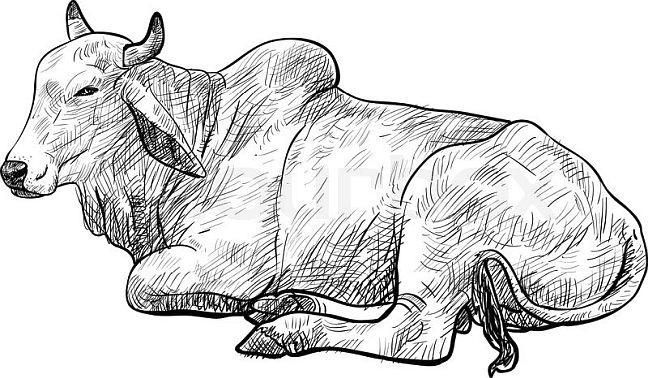 Touro, boi, vaca