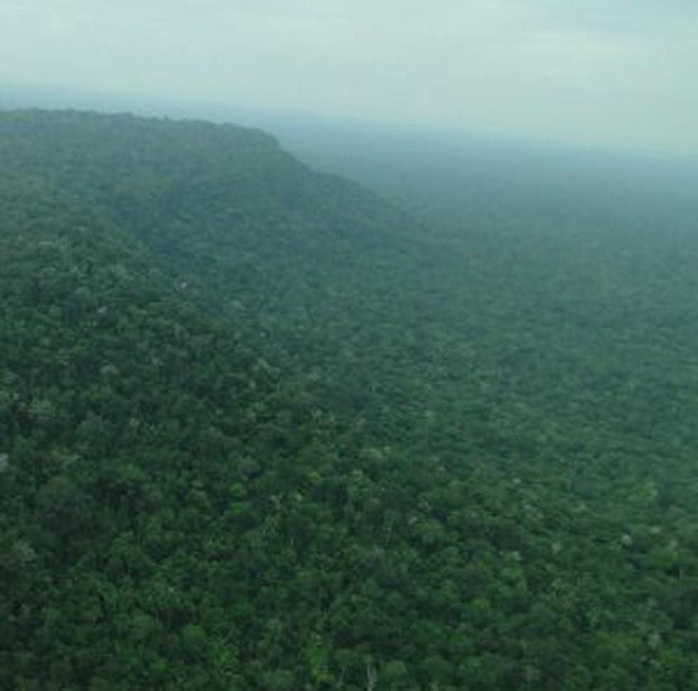 Uma das florestas está localizada em Porto Velho (Foto: ICMBio/Divulgação)