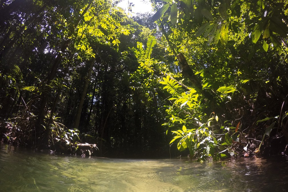 Floresta Nacional do Tapajós, em Santarém e Belterra, cidades no Pará — Foto: Marcelo Brandt/G1