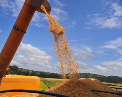 Só 6% dos produtores de arroz do RS conseguiram aproveitar disparada nos preços