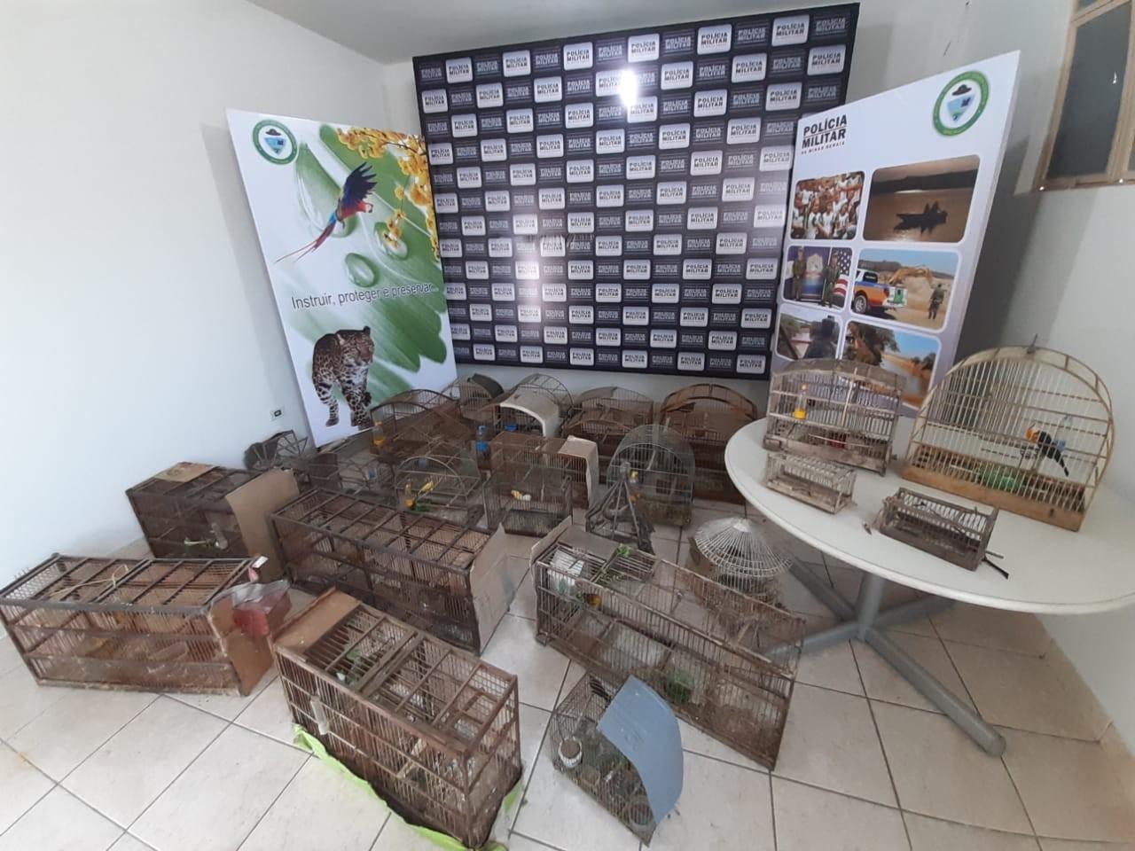 Operação 'Fauna I' prende sete pessoas suspeitas de caçar aves em cidades do Centro-Oeste de MG - Notícias - Plantão Diário