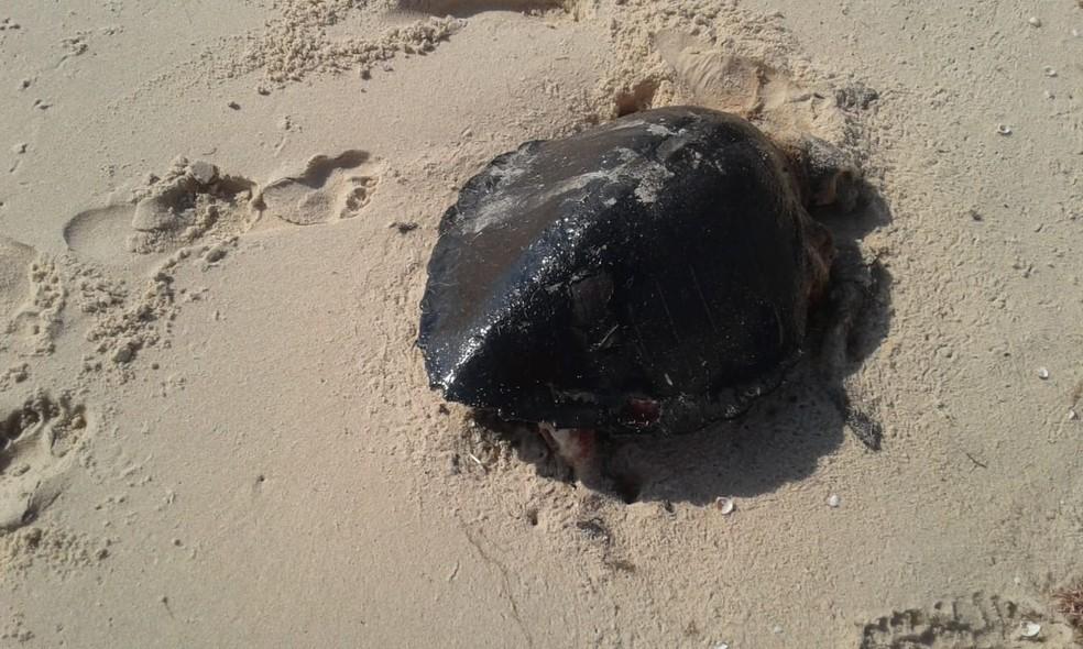 Ao menos 44 tartarugas morreram com manchas de óleo no Ceará — Foto: Instituto Verdeluz