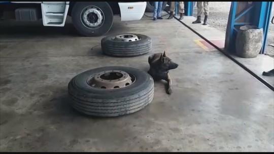 Cães farejadores encontram pacotes de cocaína e crack escondidos em pneu de carreta no Oeste catarinense