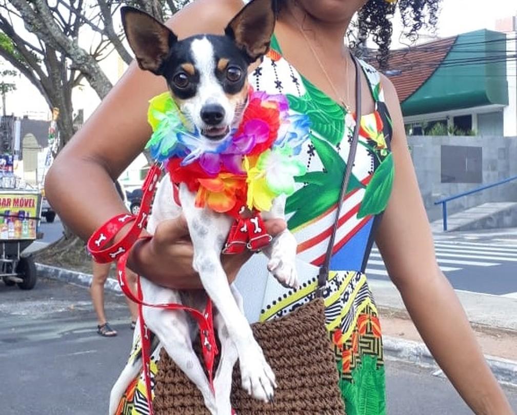 Cães participaram de carnaval pet em Salvador — Foto: Divulgação