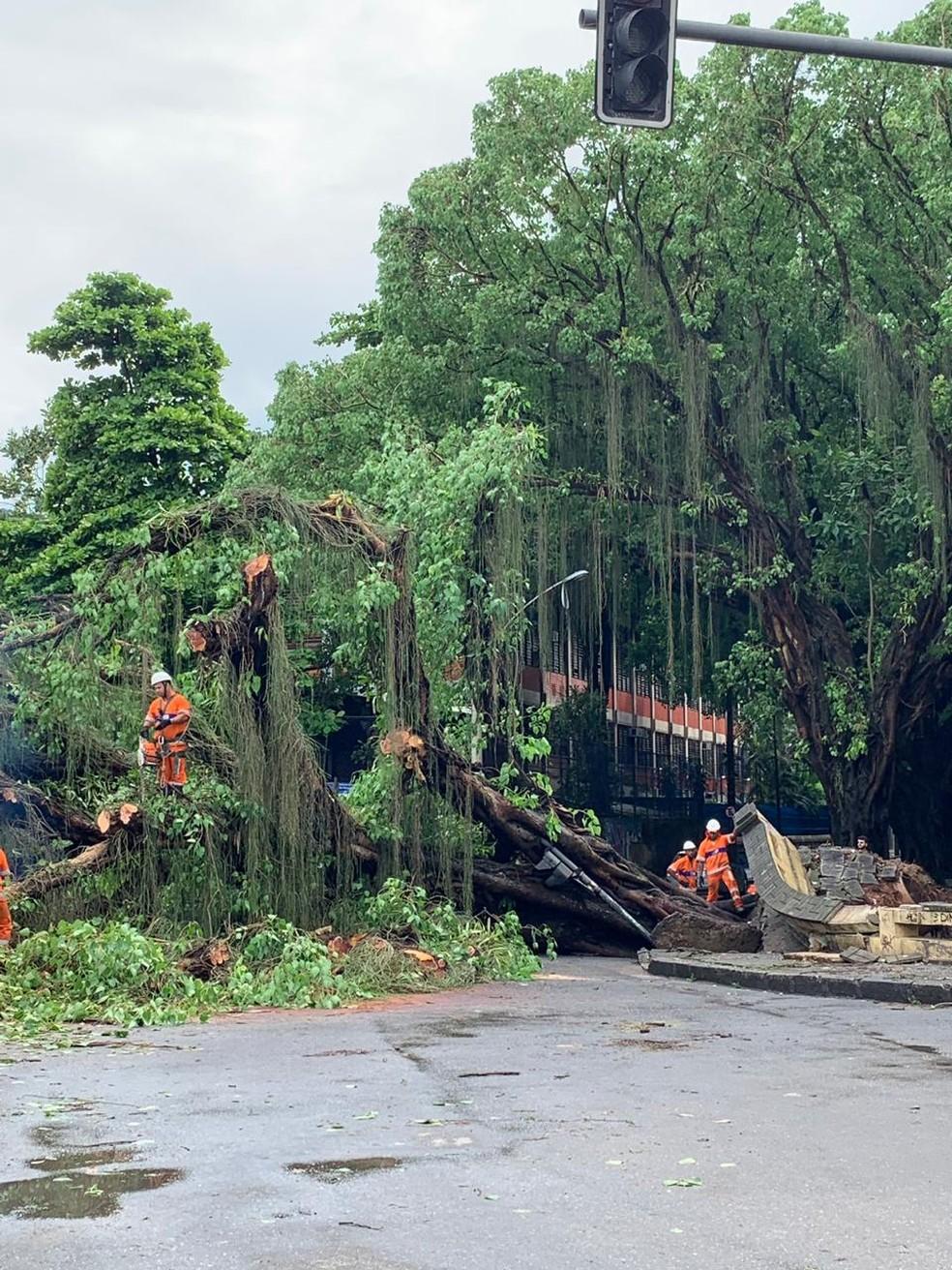 Árvore cai na Rua Marquês de São Vicente, na Gávea — Foto: Carol Lanzarini/G1