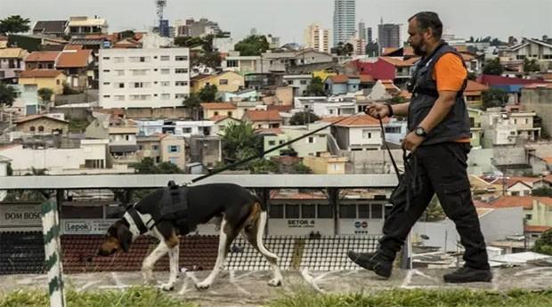 Barão, da Busca Pet, é um cão farejador que busca animais desaparecidos em zonas urbanas e rurais com seu treinado (Foto: Divulgação / Busca Pet)