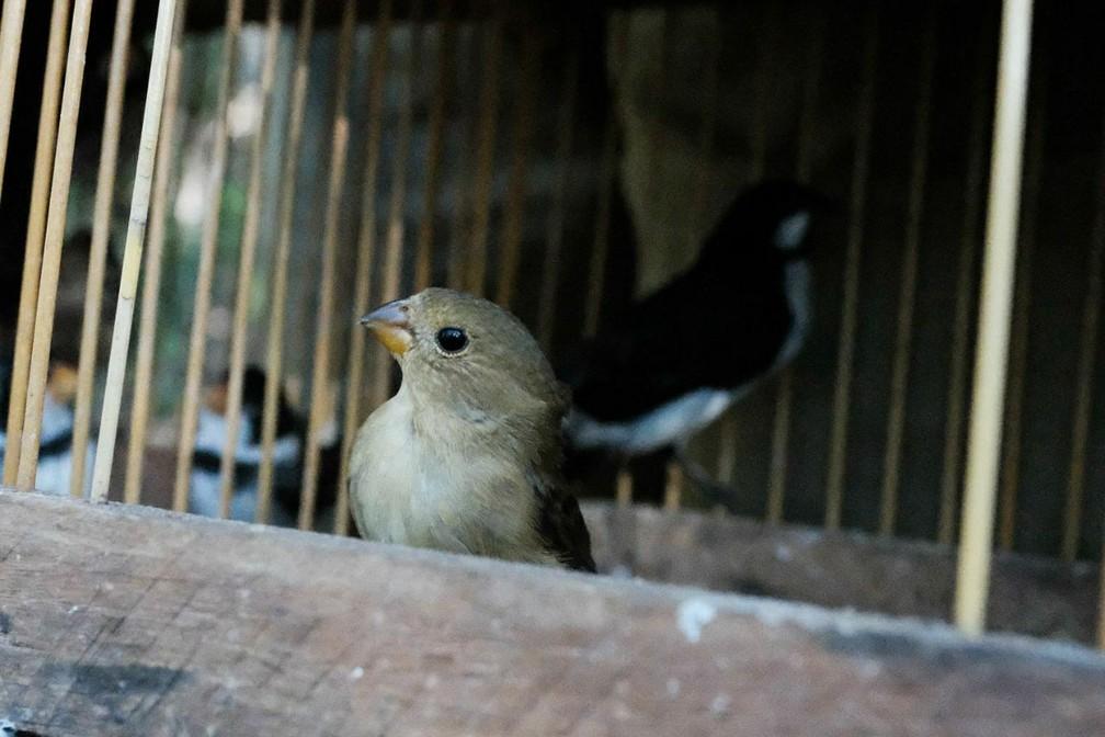 Pássaros foram resgatados durante ações da FPI do São Francisco, no interior de Alagoas (Foto: Jonathan Lins/MP-AL)