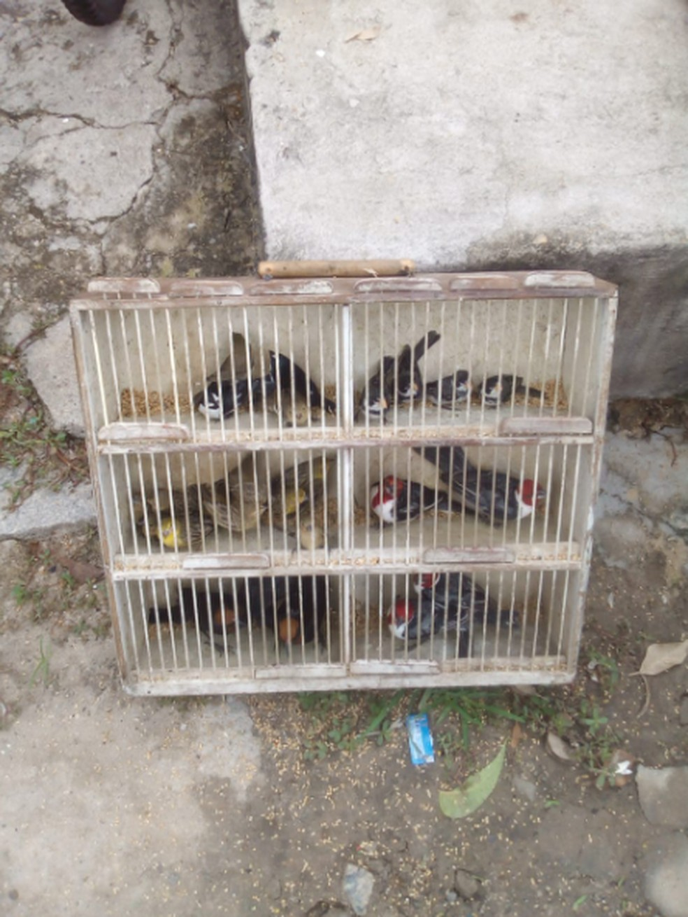 Todos os animais devem ser soltos na área de mata na capital. — Foto: Marcio Sousa/Sociedade Protetora Ambiental
