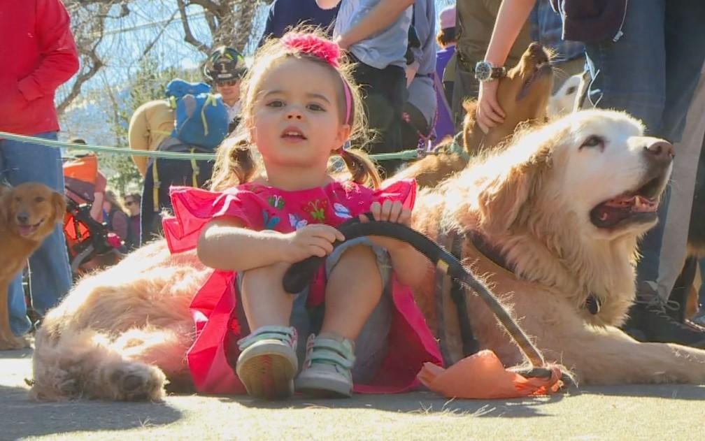Cães da raça golden retriever participam de encontro na cidade de Golden, Colorado, nos EUA, no domingo (3) — Foto: Reprodução/NBC