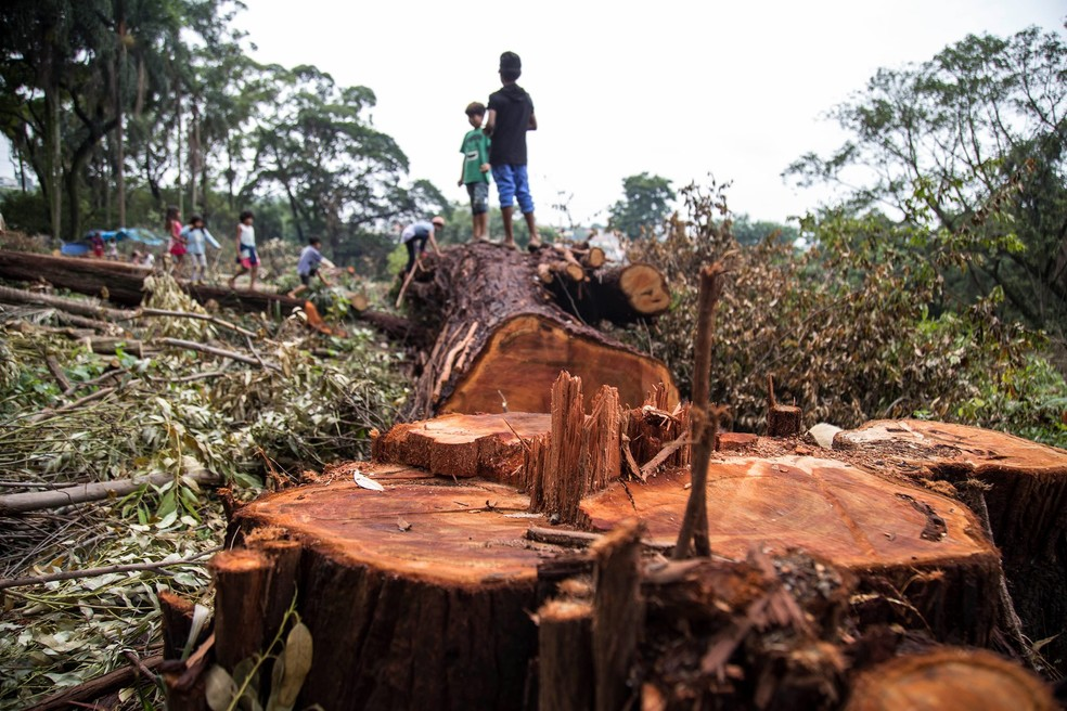Árvores derrubadas em terreno da construtora Tenda; área é de mata nativa sob proteção ambiental — Foto: Reprodução/Facebook