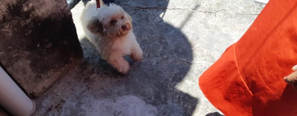 Após tiros, cadela Mel correu da casa e subiu sobre as costas da vítima caída no chão  — Foto: Leabém Monteiro/ SVM