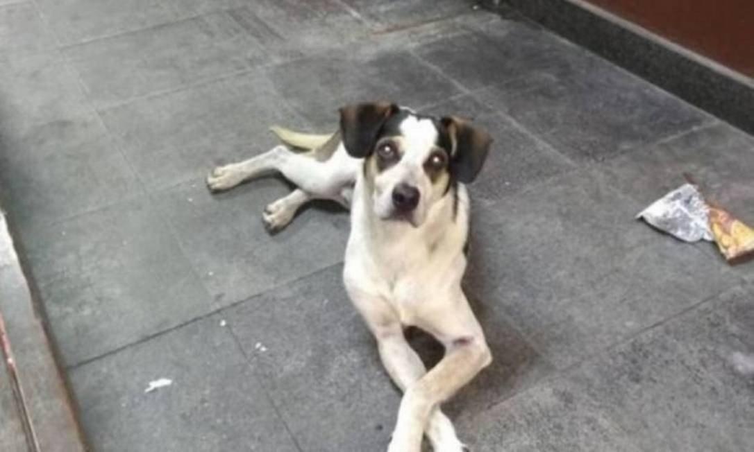 Ataque à cachorra causou comoção nas redes sociais