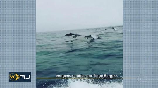 Golfinhos chamam atenção de passageiros de embarcação durante saltos pelo litoral do RJ